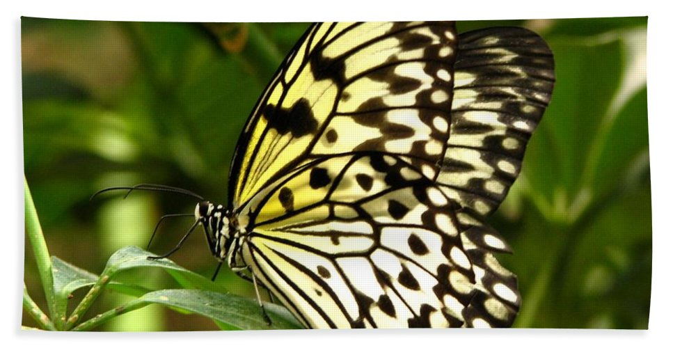 Paper Kite Butterfly Hand Towel featuring the photograph Paper Kite by J M Farris Photography