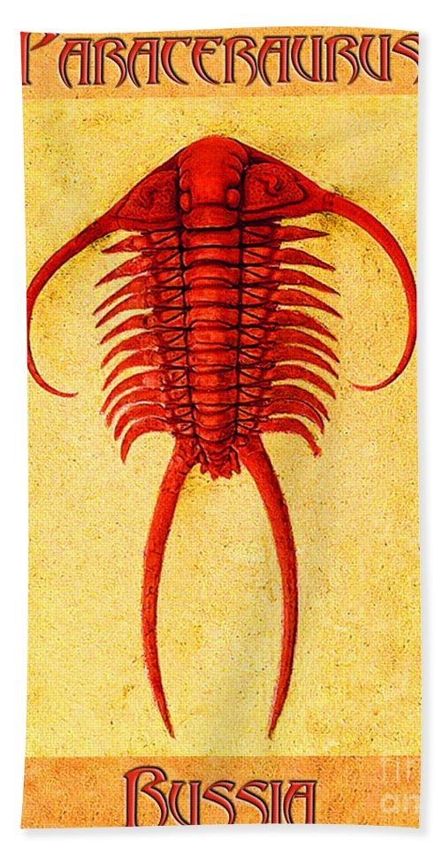 Trilobite Bath Towel featuring the photograph Paraceraurus Fossil Trilobite by Melissa A Benson