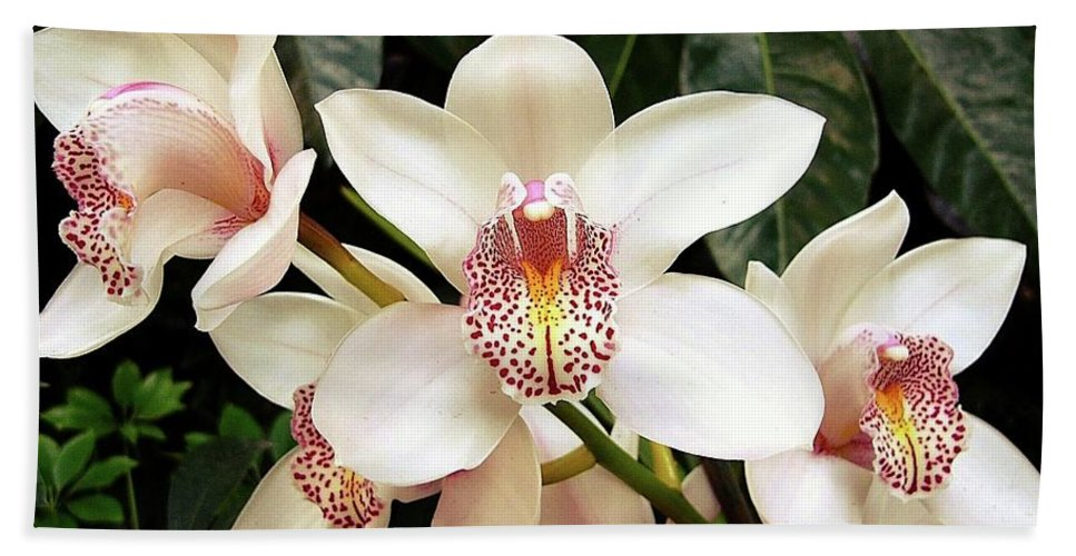 Orchids Hand Towel featuring the photograph Paradise Perfection by Kenneth Imler