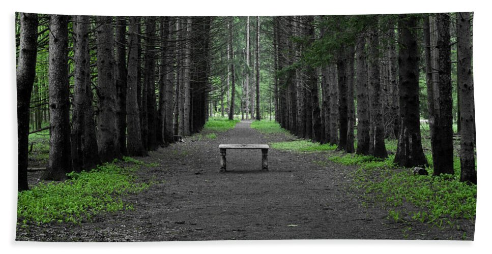 Bench Bath Sheet featuring the photograph Parallel Pines by Daniel Frei