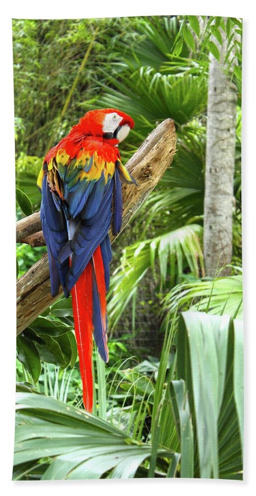 Bird Bath Sheet featuring the photograph Parrot In Tropical Setting by Sharon Minish