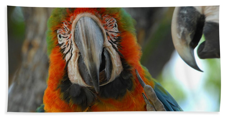 Parrot Hand Towel featuring the photograph Parroting Information by Donna Blackhall