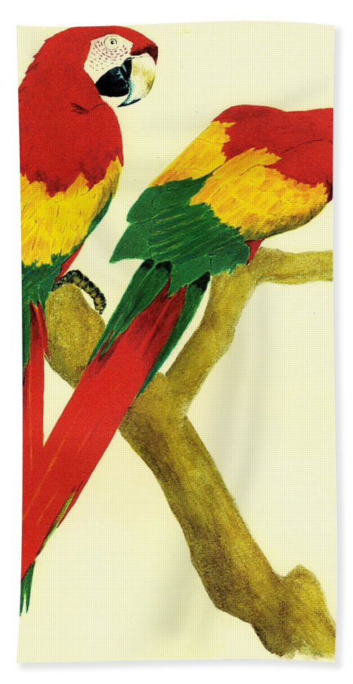Animals Hand Towel featuring the painting Parrots by Michael Vigliotti