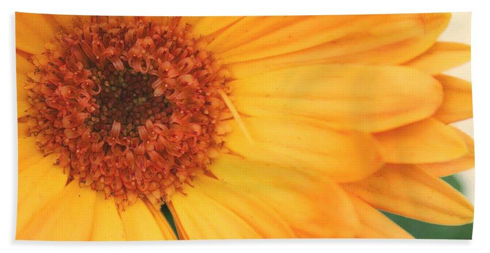 Flowers Hand Towel featuring the photograph Partly Sunny by Linda Sannuti