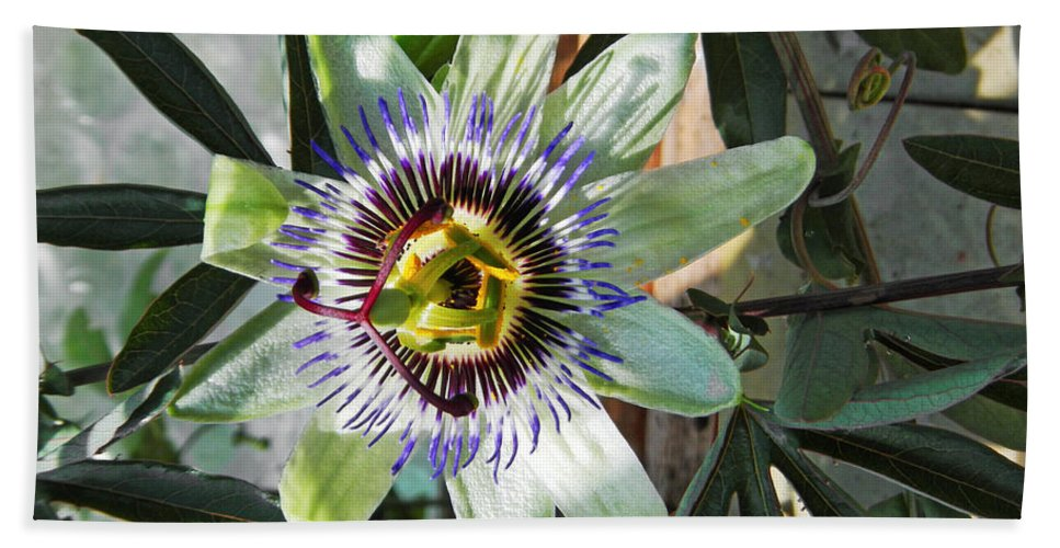 Britain Hand Towel featuring the photograph Passion Flower Close-up by Rod Johnson
