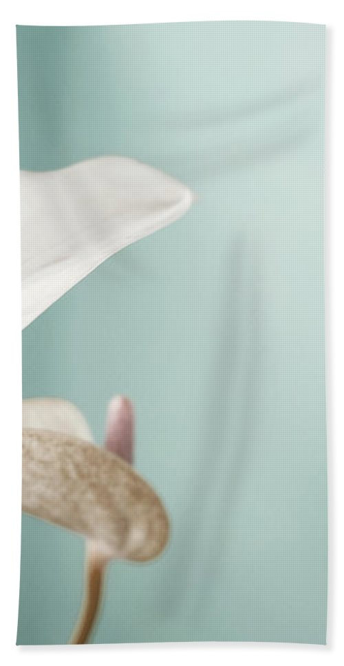 Flower Bath Sheet featuring the photograph Pastel Color Of Anthurium Flower by Dania Photo