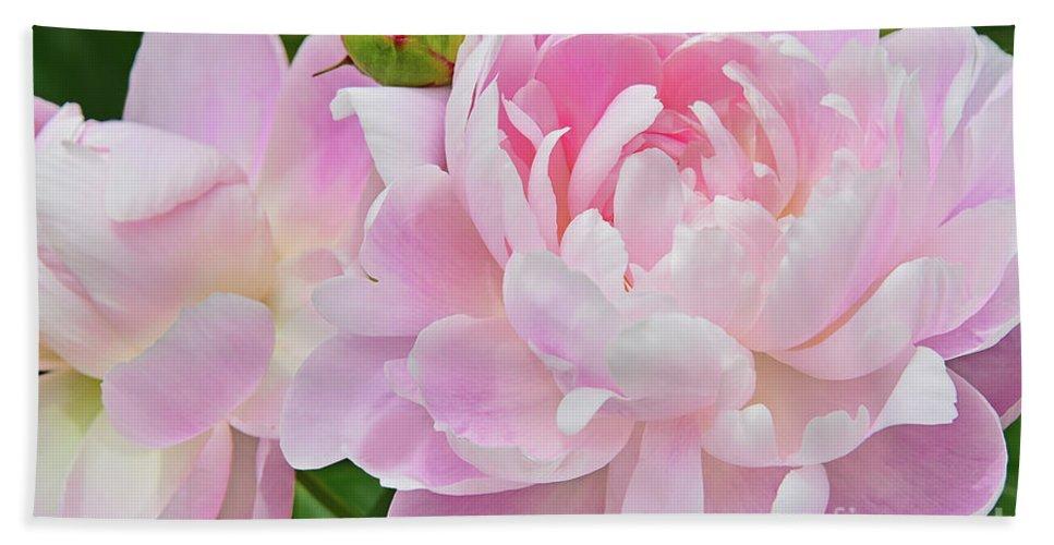 Peonies Bath Sheet featuring the photograph Pastel Pink Peonies by Regina Geoghan