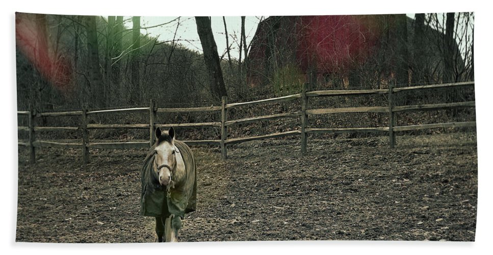Horse Bath Sheet featuring the photograph Pasture Pony by JAMART Photography