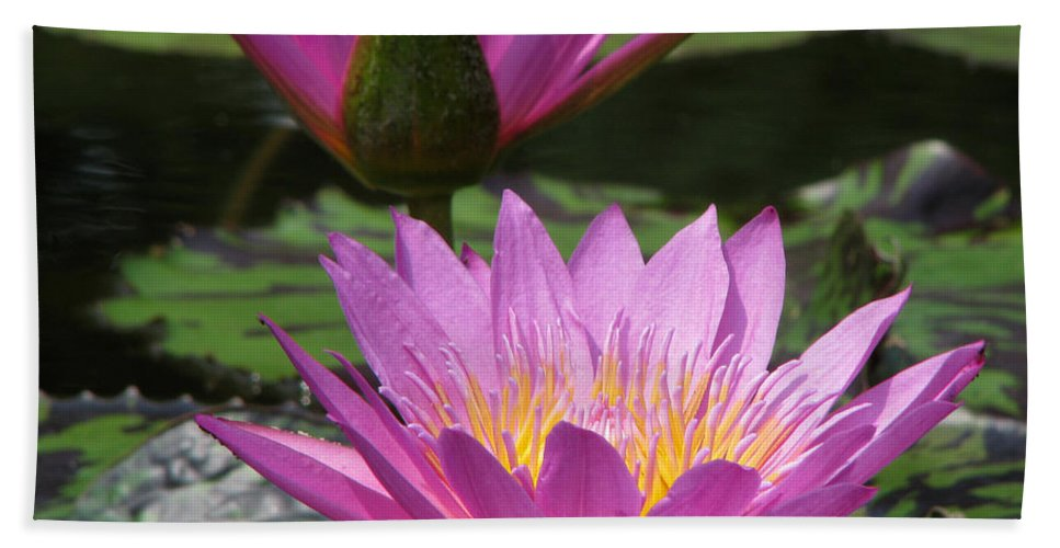 Lillypad Bath Towel featuring the photograph Peaceful by Amanda Barcon