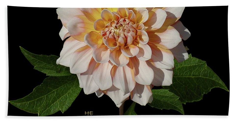 Sunlight Hand Towel featuring the photograph Peach-n-yellow Dahlia Cutout by Shirley Heyn