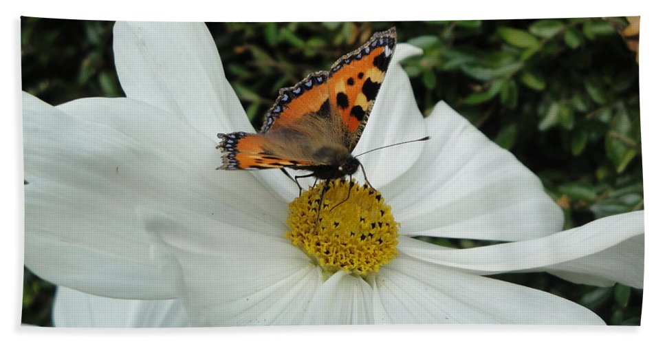 Butterfly Bath Sheet featuring the photograph Peacock Butterfly On Cosmos by Susan Baker