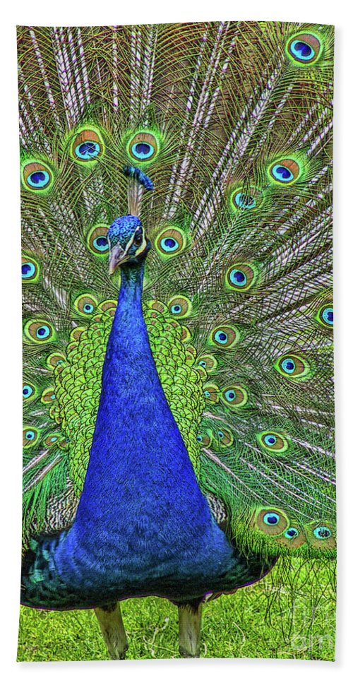 Oak Glen Hand Towel featuring the photograph Peacock In A Oak Glen Autumn 3 by Tommy Anderson