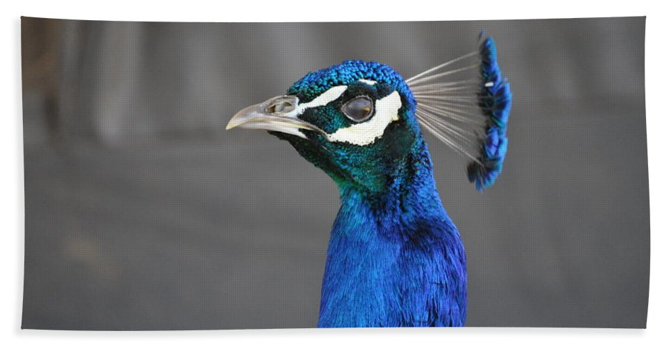 Blue Hand Towel featuring the photograph Peacock Stare Down by Bridgette Gomes