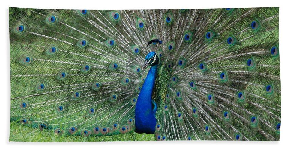 Peacock Bath Towel featuring the photograph Peacocks Glory by Rob Hans
