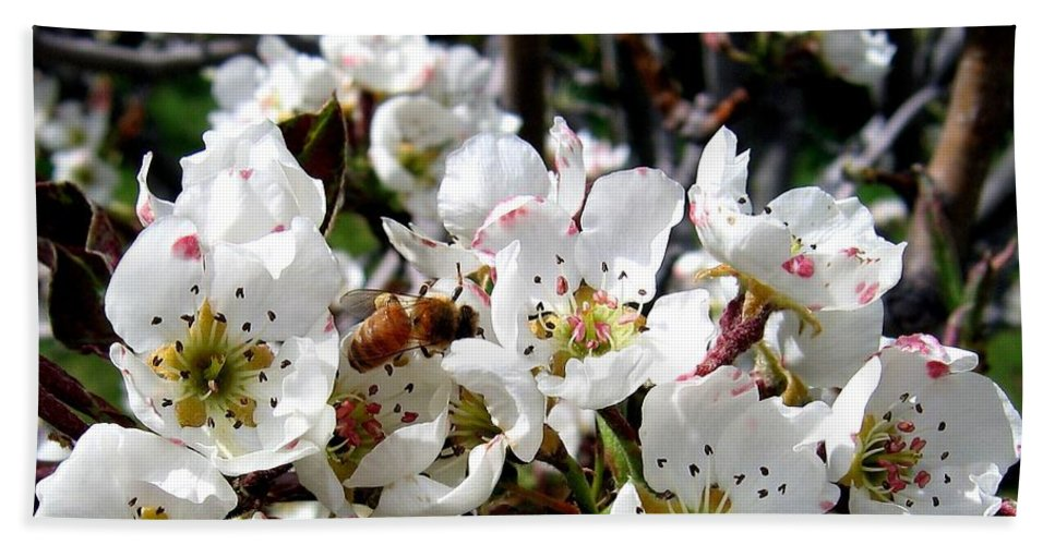Blossoms Hand Towel featuring the photograph Pear Blossoms And Bee by Will Borden