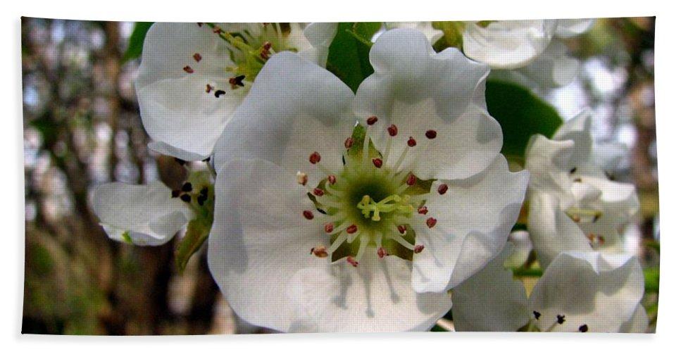 Pear Tree Blossum Bath Sheet featuring the photograph Pear Tree Blossoms 3 by J M Farris Photography