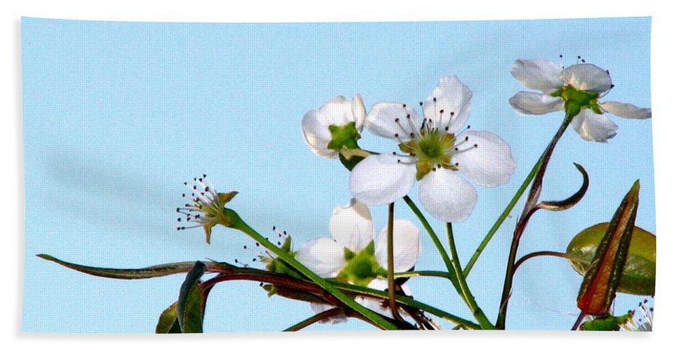 Pear Tree Blossum Bath Sheet featuring the photograph Pear Tree Blossoms 4 by J M Farris Photography