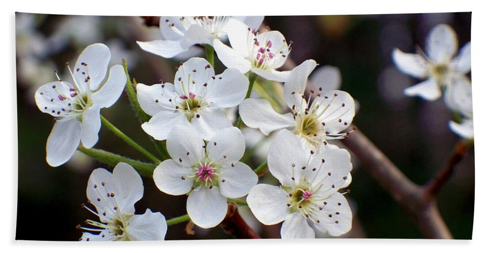 Pear Bath Sheet featuring the photograph Pear Tree Blossoms II by Betty Northcutt