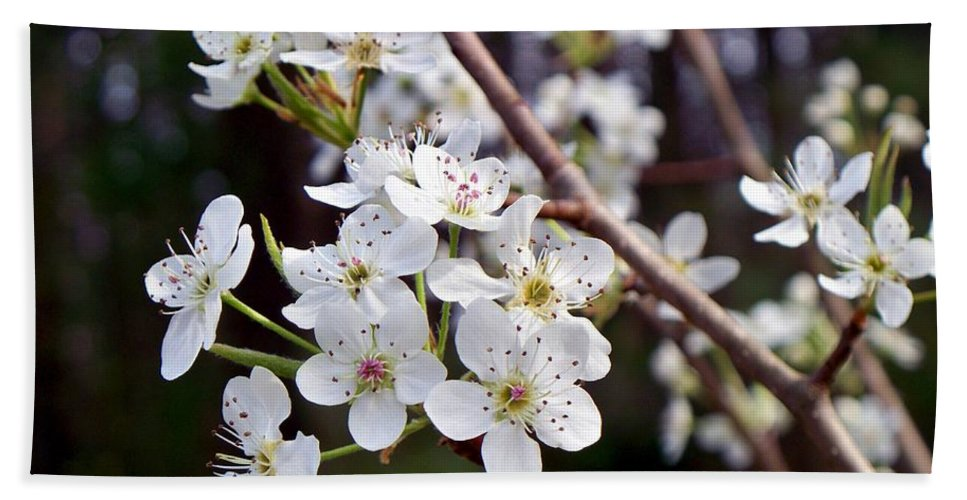 Pear Bath Sheet featuring the photograph Pear Tree Blossoms IIi by Betty Northcutt