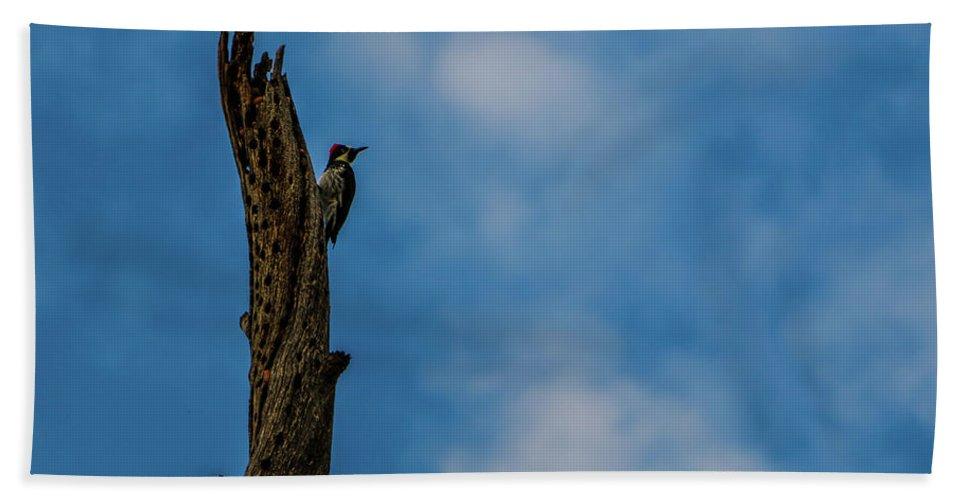Wood Pecker Bath Sheet featuring the photograph Pecking Away by Chaznik Raab