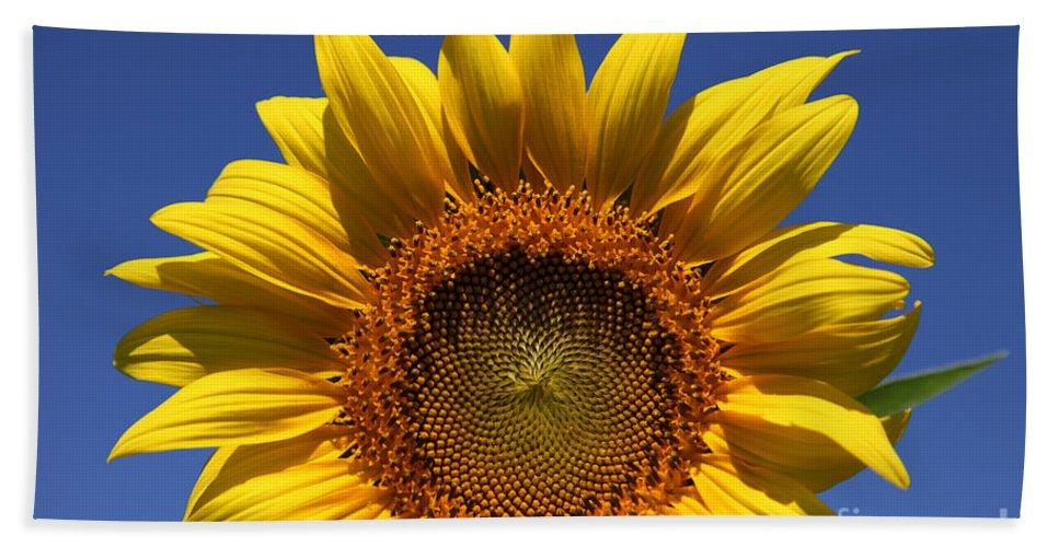 Sunflowers Bath Towel featuring the photograph Peek A Boo by Amanda Barcon