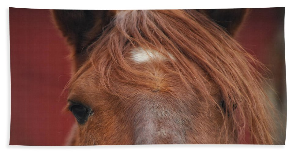 Horse Hand Towel featuring the photograph Peek A Boo by Donna Blackhall