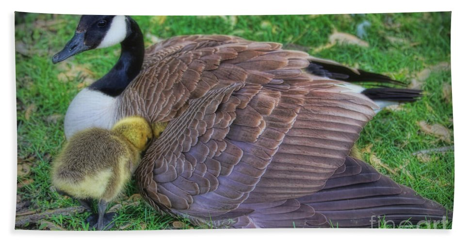 Canada Geese Hand Towel featuring the photograph Peek-a-boo Goslings by Elizabeth Winter