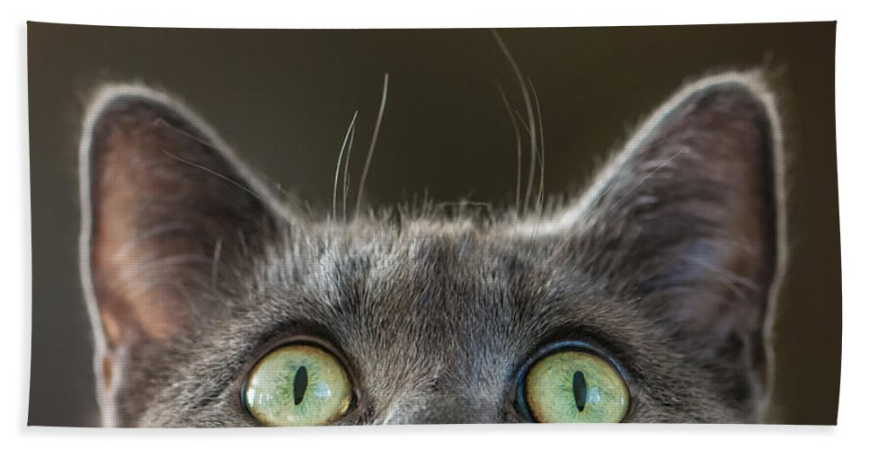 Cat Hand Towel featuring the photograph Peek-a-boo by Maggie Terlecki