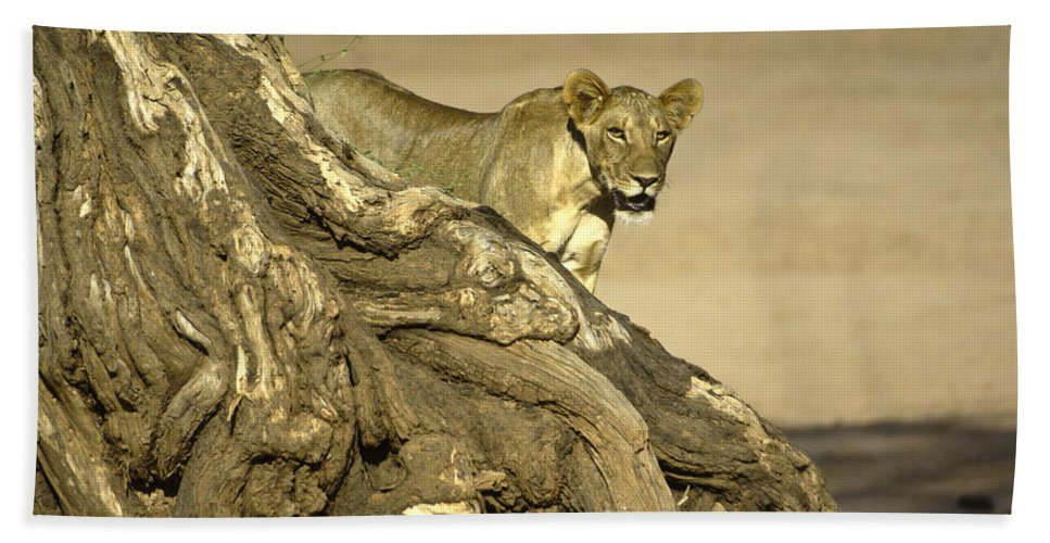 Africa Hand Towel featuring the photograph Peeking Out by Michele Burgess