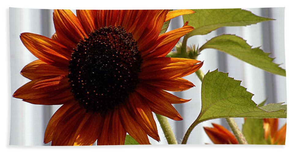 Brown Hand Towel featuring the photograph Peerless by RC DeWinter