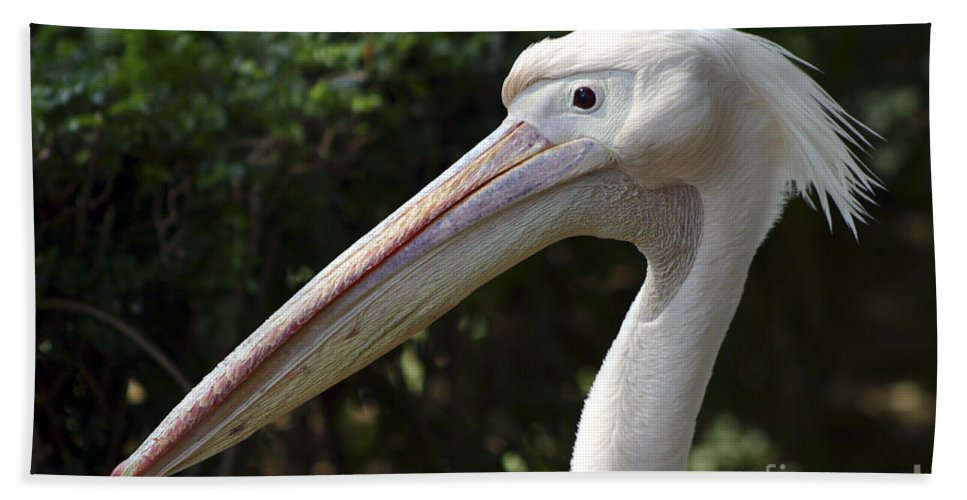 Close Up Bath Towel featuring the photograph Pelican by Danny Yanai
