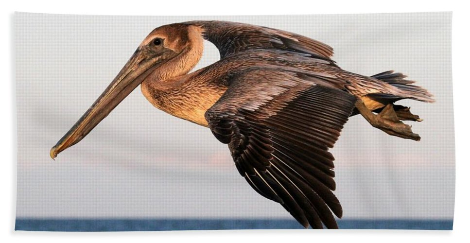 Pelican Hand Towel featuring the photograph Pelican In Flight At Sunset by Sabrina L Ryan
