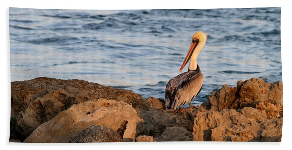 Pelican Hand Towel featuring the photograph Pelican On The Rocks by Sabrina L Ryan