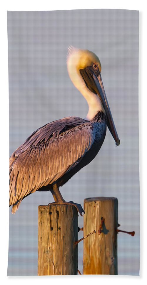 Pelican Hand Towel featuring the photograph Pelican Perch by Janet Fikar