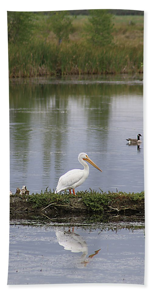Bird Bath Sheet featuring the photograph Pelican Reflection by Alyce Taylor