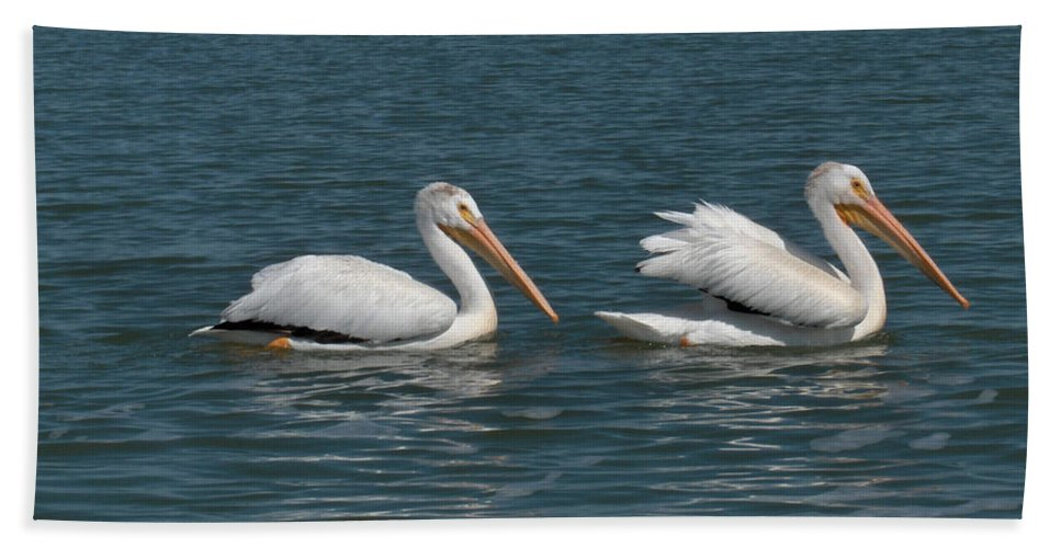 Wild Animals Birds Nature Lake Water Pelicans Bath Sheet featuring the photograph Pelicans by Andrea Lawrence