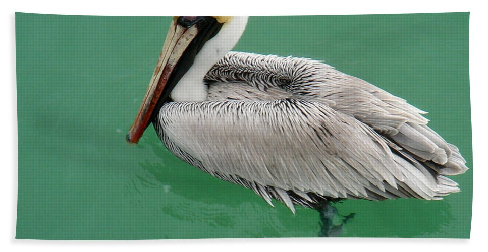 Florida Hand Towel featuring the photograph Pelican's Cove by Chris Andruskiewicz