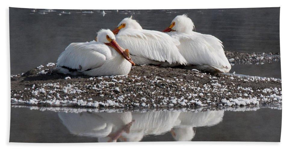 Pelicans Bath Sheet featuring the photograph Pelicans by Gary Beeler