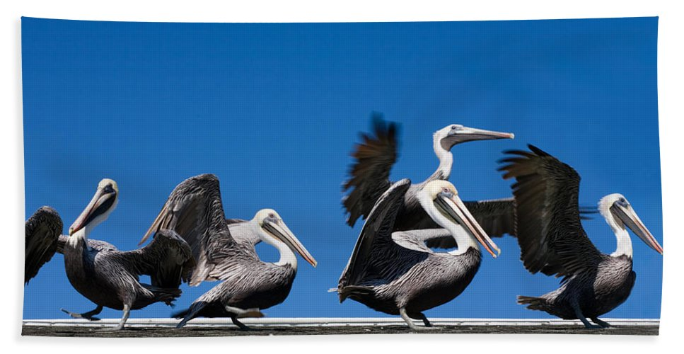 Pelicans Bath Towel featuring the photograph Pelicans Take Flight by Mal Bray