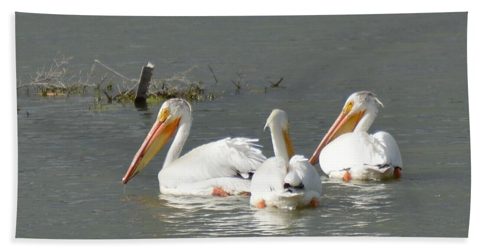 Pelicans Hand Towel featuring the photograph Pelicans by Wendy Fox