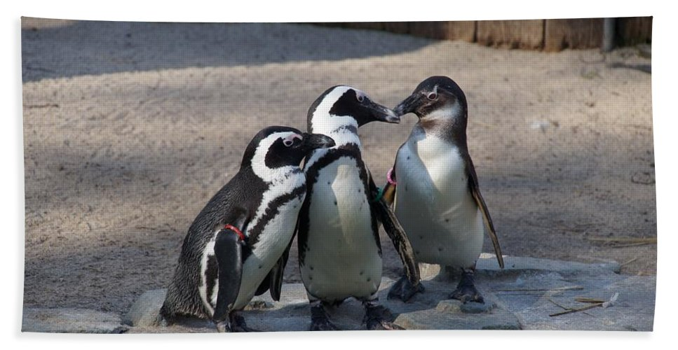 Penguin Hand Towel featuring the photograph Penguin Embracing by FL collection