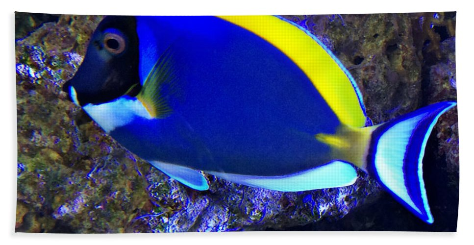 Blue Tang Fish Hand Towel featuring the photograph Blue Tang Fish by Kathy M Krause