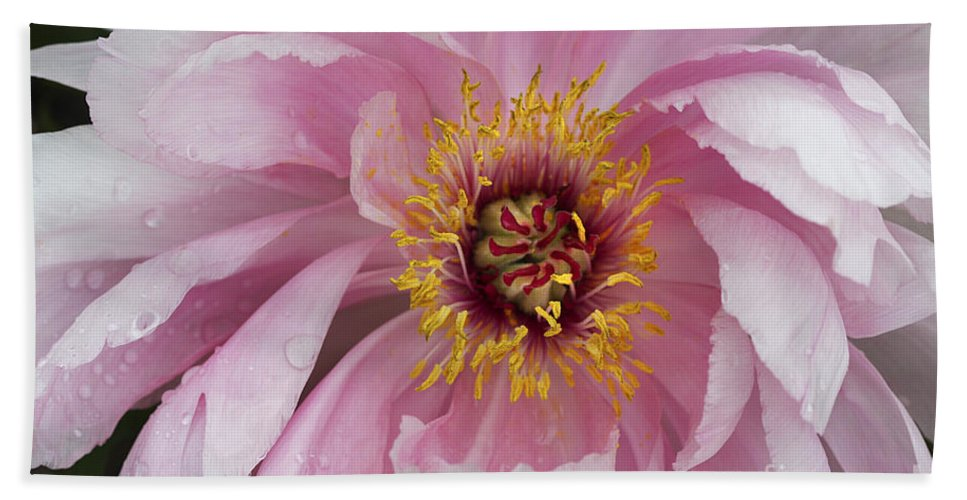 Flower Bath Towel featuring the photograph Peonie In Pink by Deborah Benoit