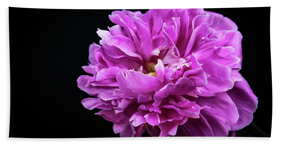 Peonies Bath Sheet featuring the photograph Peonies by Wayne Danielson