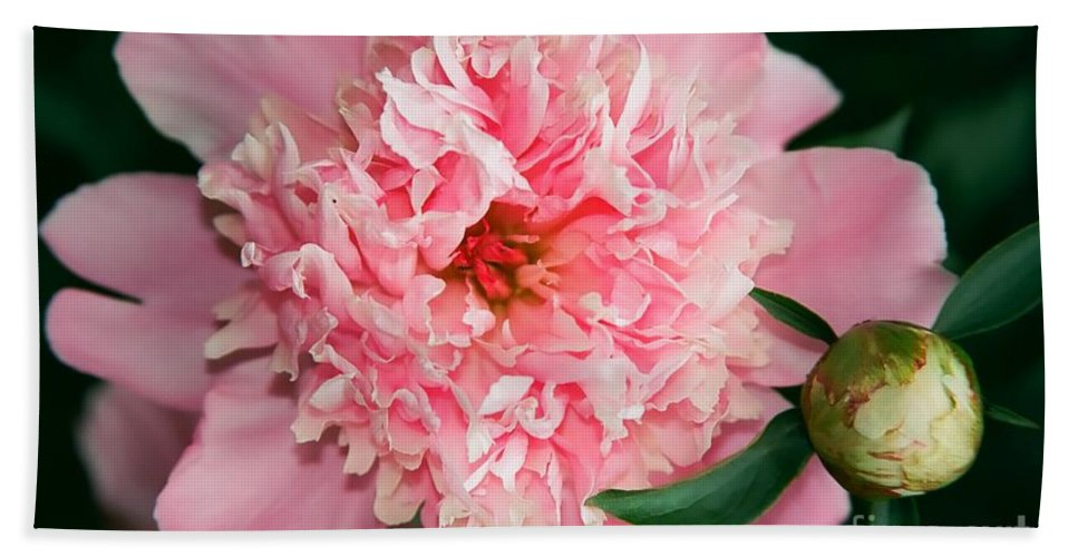 Flowers Hand Towel featuring the photograph Peony And Bud by Kathy McClure