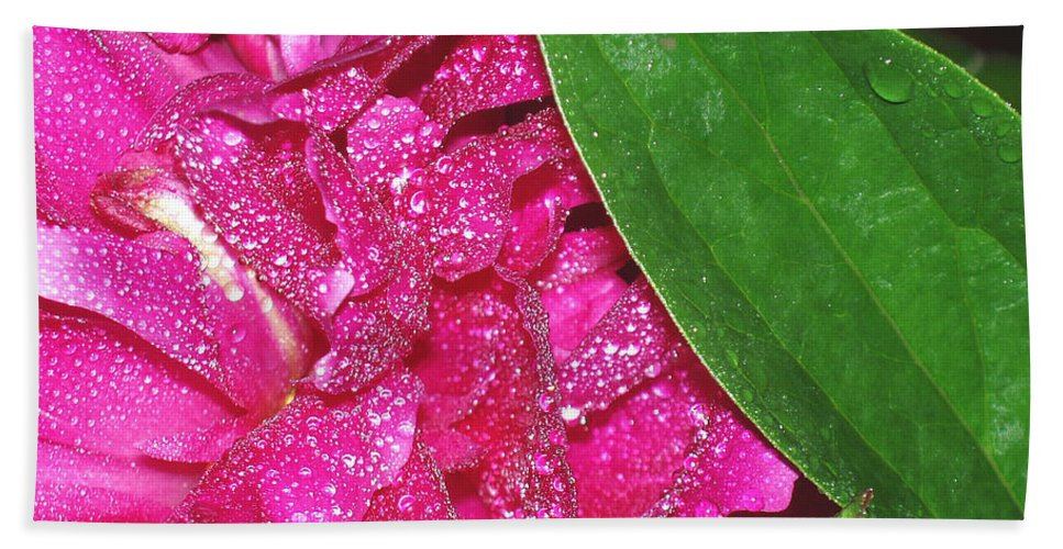 Peony Hand Towel featuring the photograph Peony And Leaf by Nancy Mueller
