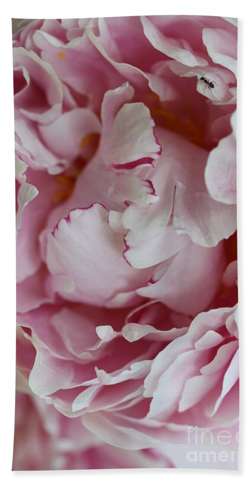 Peony Hand Towel featuring the photograph Peony Close Up by Christiane Schulze Art And Photography