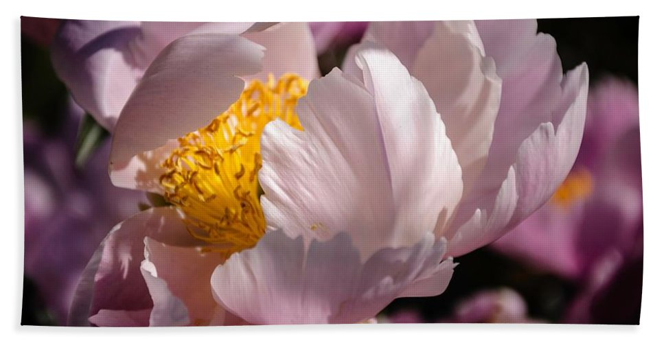 Flower Bath Sheet featuring the photograph Peony Bride by Ken Foster