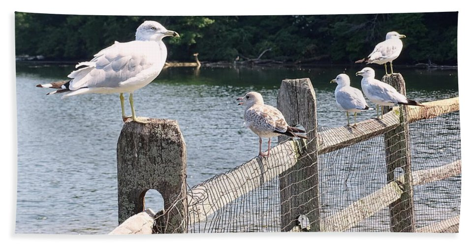 Seagulls Hand Towel featuring the photograph Perched Gulls by Ed Weidman
