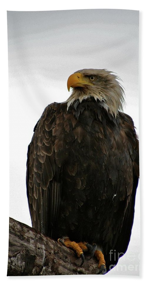 Eagle Bath Sheet featuring the photograph Perched by Rick Monyahan